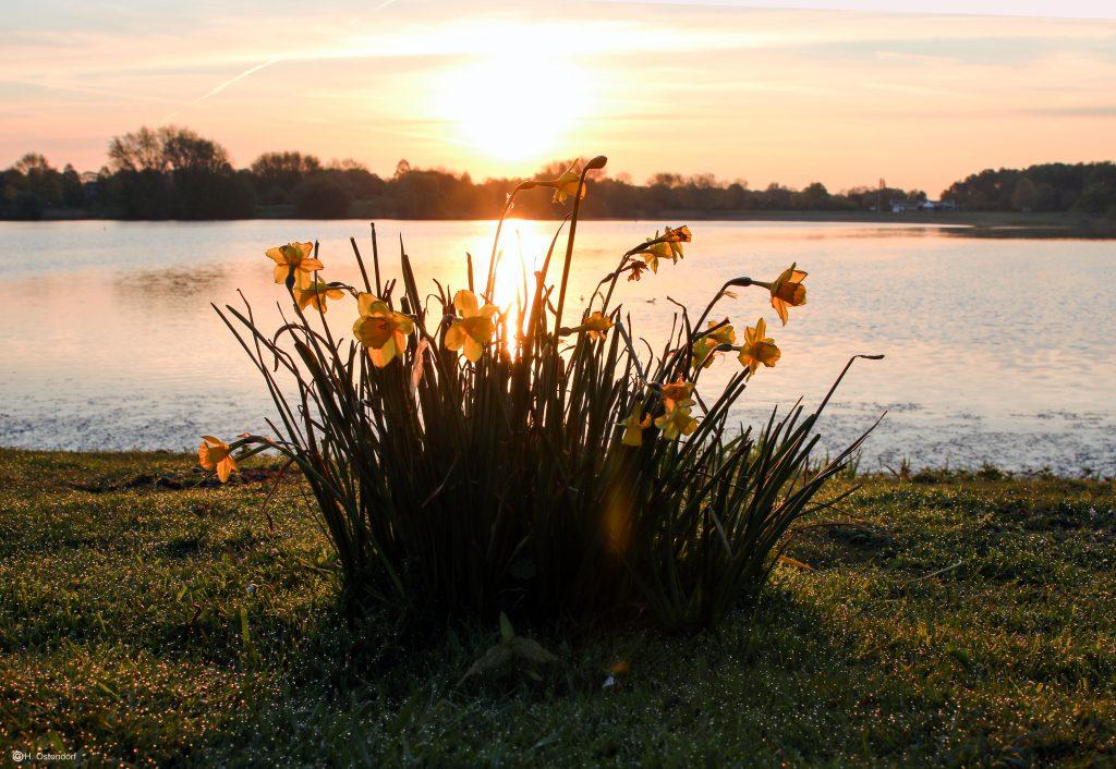 Garten Grandiflora Gewinnspiel 2016 Frühlingsfoto